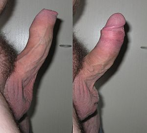 Uncircumcised dick sex