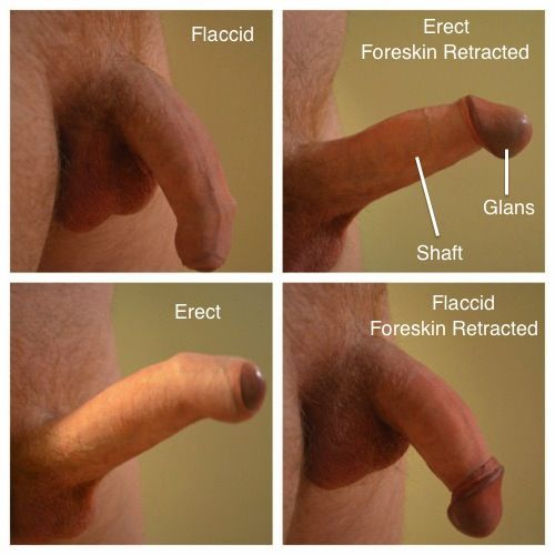 Uncircumised dick